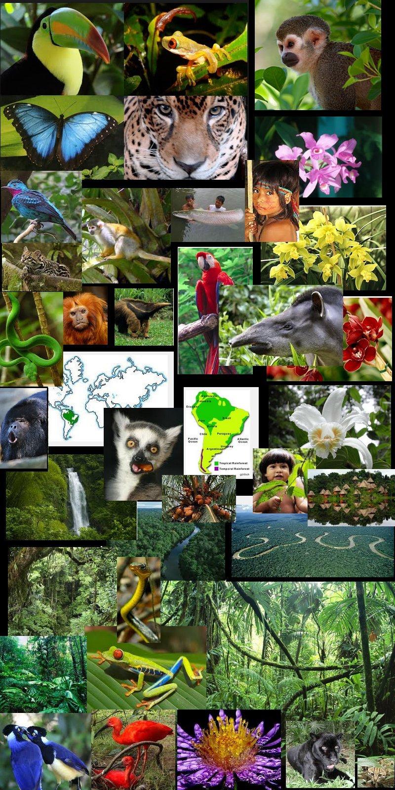 amazon rainforest plants collage. amazon jungle rainforest plants collage t